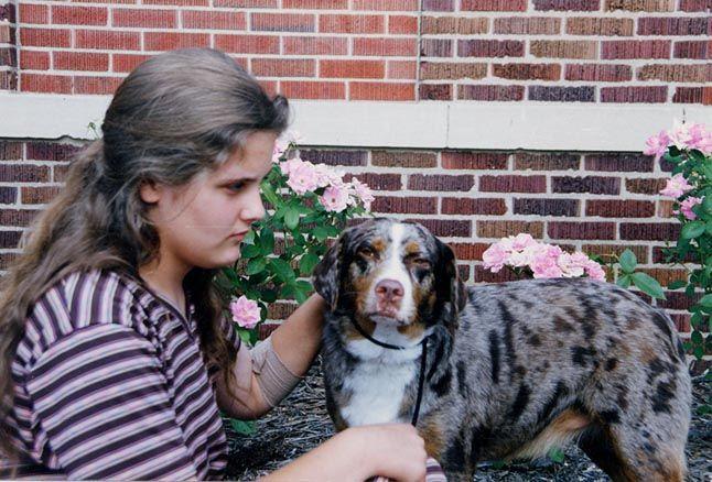 Kennel Club Companion Dog Registration
